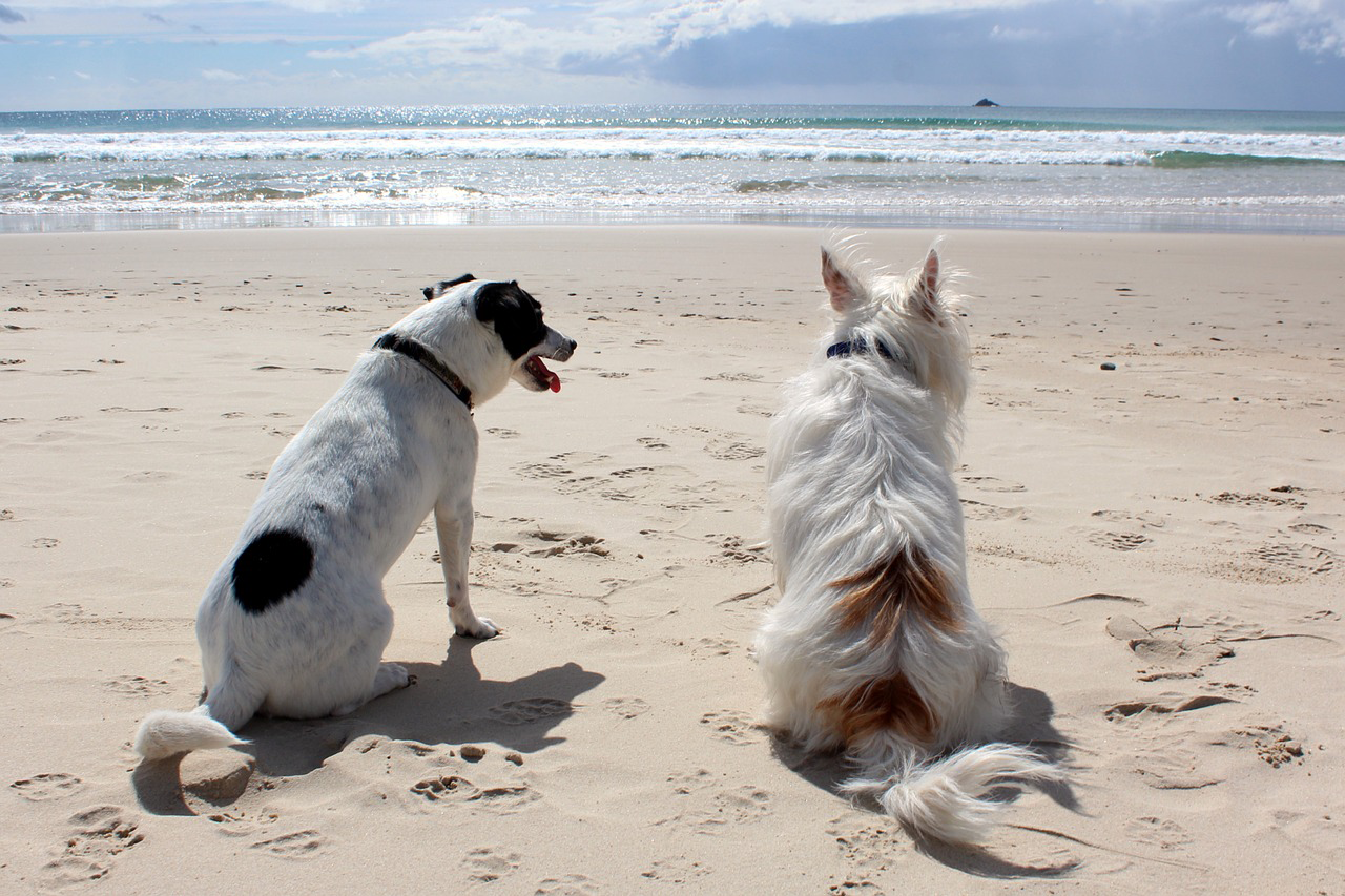 Our guide to dog walking along the beaches of Poole, Bournemouth & Christchurch